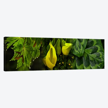 Leaves and flowers Canvas Print #PIM9616} by Panoramic Images Canvas Art
