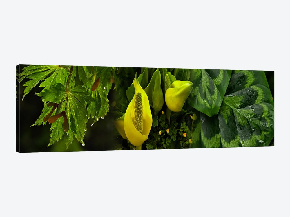 Leaves and flowers by Panoramic Images 1-piece Canvas Artwork
