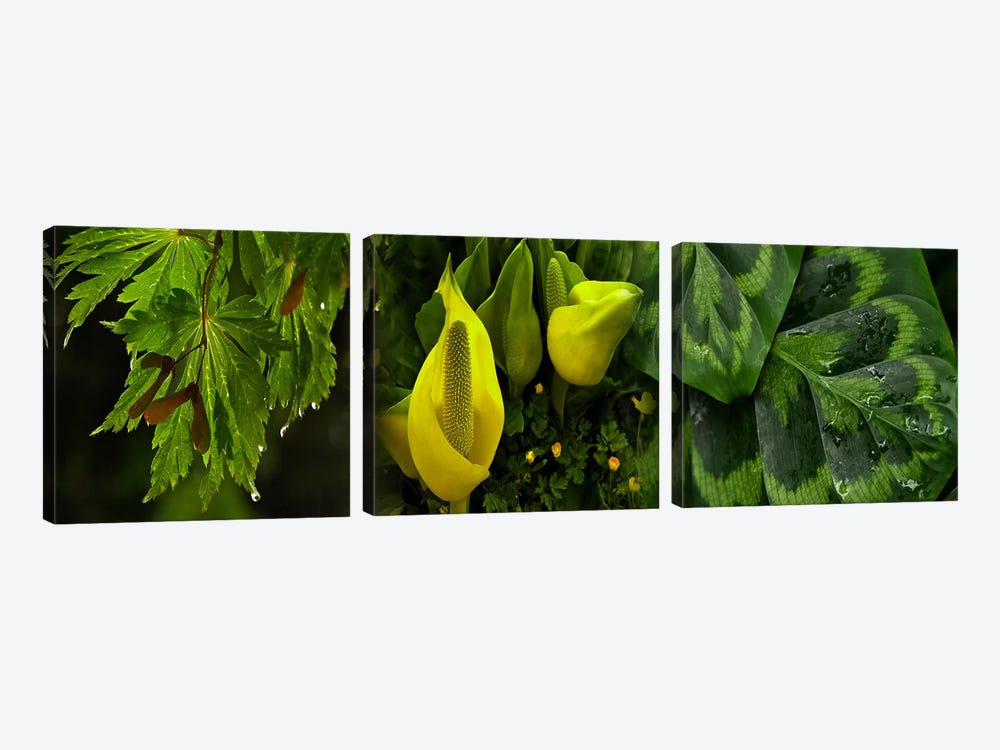 Leaves and flowers by Panoramic Images 3-piece Canvas Wall Art