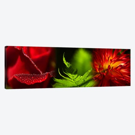 Leaves and flowers Canvas Print #PIM9617} by Panoramic Images Canvas Wall Art