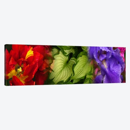 Tulip and Iris flowers Canvas Print #PIM9618} by Panoramic Images Art Print