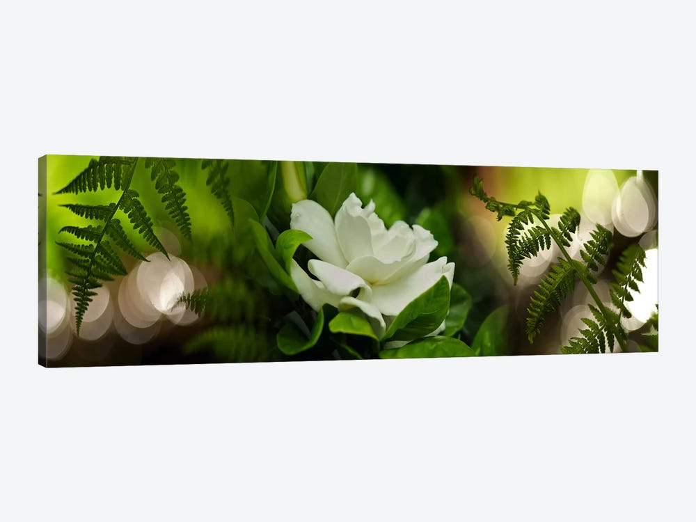 Fern with magnolia by Panoramic Images 1-piece Canvas Print