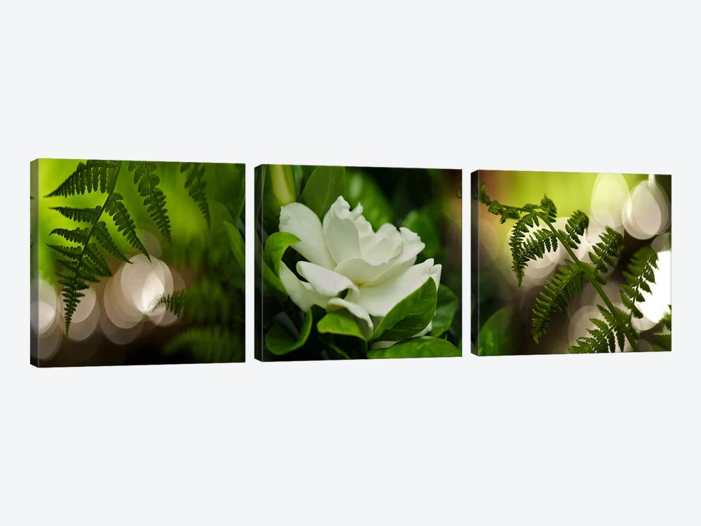Fern with magnolia by Panoramic Images 3-piece Art Print
