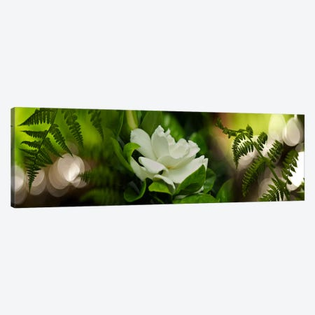 Fern with magnolia 3-Piece Canvas #PIM9620} by Panoramic Images Canvas Art