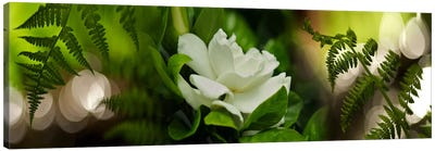 Fern with magnolia Canvas Art Print