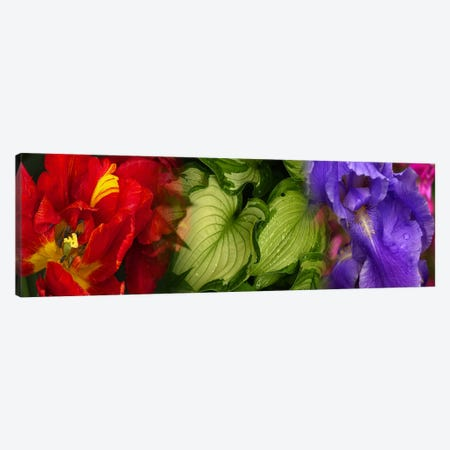 Tulip and Iris flowers Canvas Print #PIM9621} by Panoramic Images Canvas Art