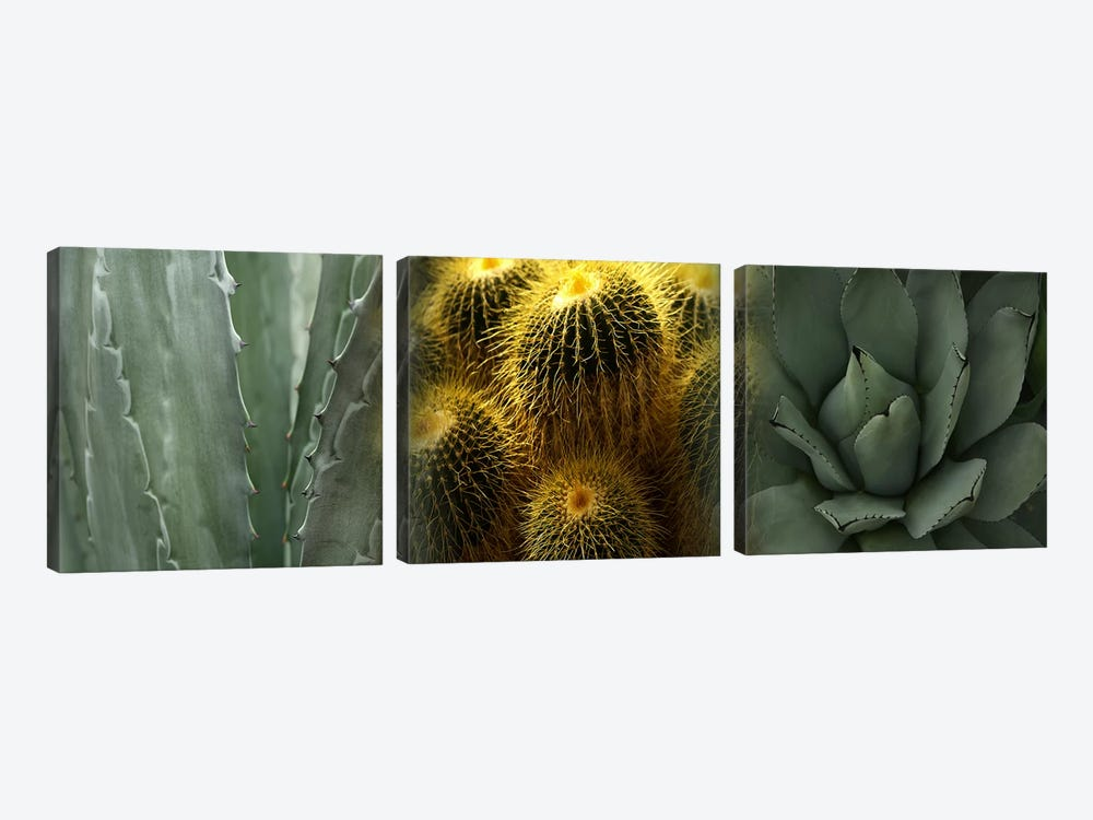 Cactus plants by Panoramic Images 3-piece Art Print