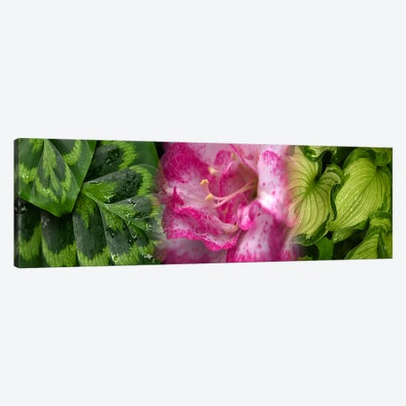 Leaves and flowers Canvas Print #PIM9624} by Panoramic Images Art Print