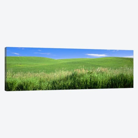 Rolling green hill, Palouse, Whitman County, Washington State, USA Canvas Print #PIM9662} by Panoramic Images Canvas Art