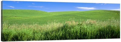 Rolling green hill, Palouse, Whitman County, Washington State, USA Canvas Art Print