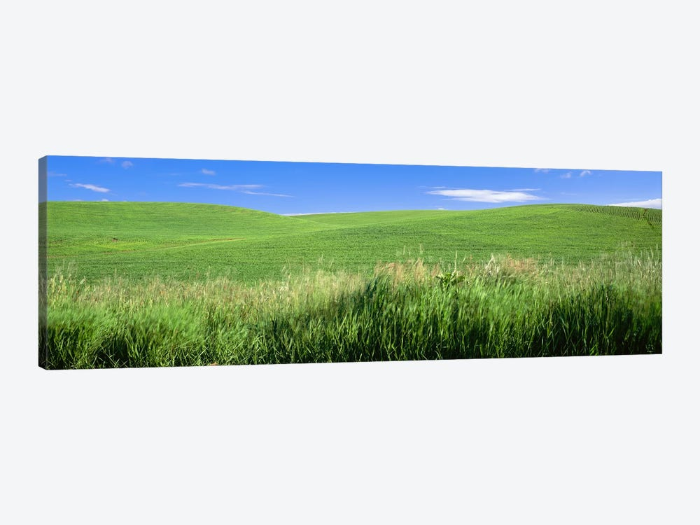 Rolling green hill, Palouse, Whitman County, Washington State, USA by Panoramic Images 1-piece Canvas Print