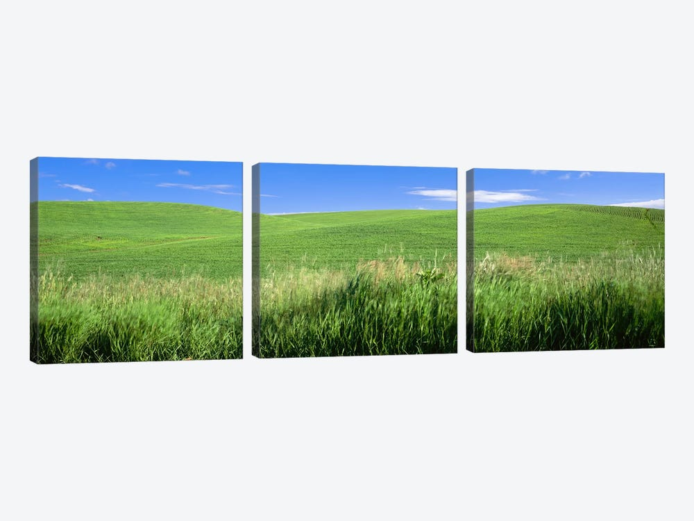 Rolling green hill, Palouse, Whitman County, Washington State, USA by Panoramic Images 3-piece Art Print