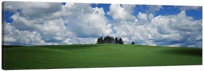 Trees on the top of a hill, Palouse, Whitman County, Washington State, USA Canvas Print #PIM9663