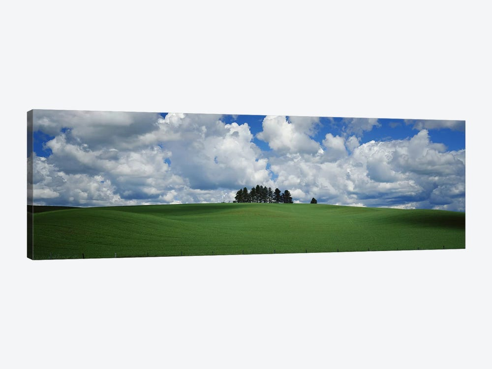 Trees on the top of a hill, Palouse, Whitman County, Washington State, USA by Panoramic Images 1-piece Canvas Artwork