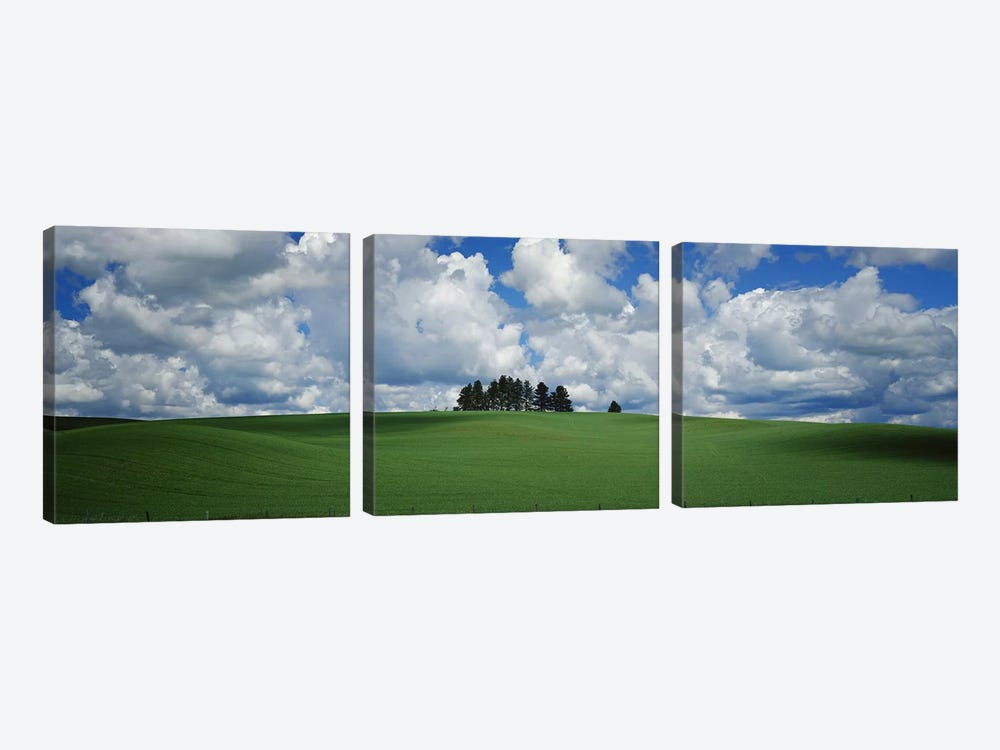 Trees on the top of a hill, Palouse, Whitman County, Washington State, USA by Panoramic Images 3-piece Canvas Artwork