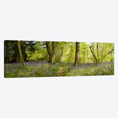 Trees in a forest, Thursford Wood, Norfolk, England Canvas Print #PIM9715} by Panoramic Images Art Print