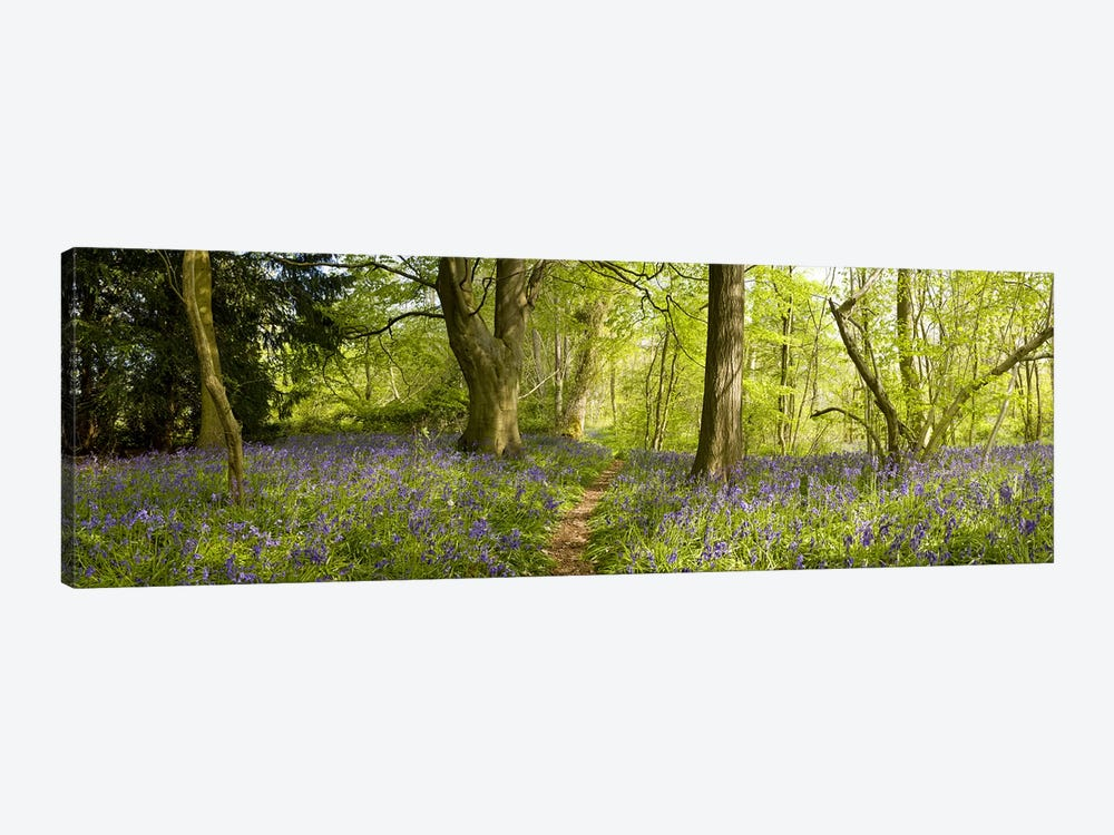 Trees in a forest, Thursford Wood, Norfolk, England by Panoramic Images 1-piece Canvas Artwork