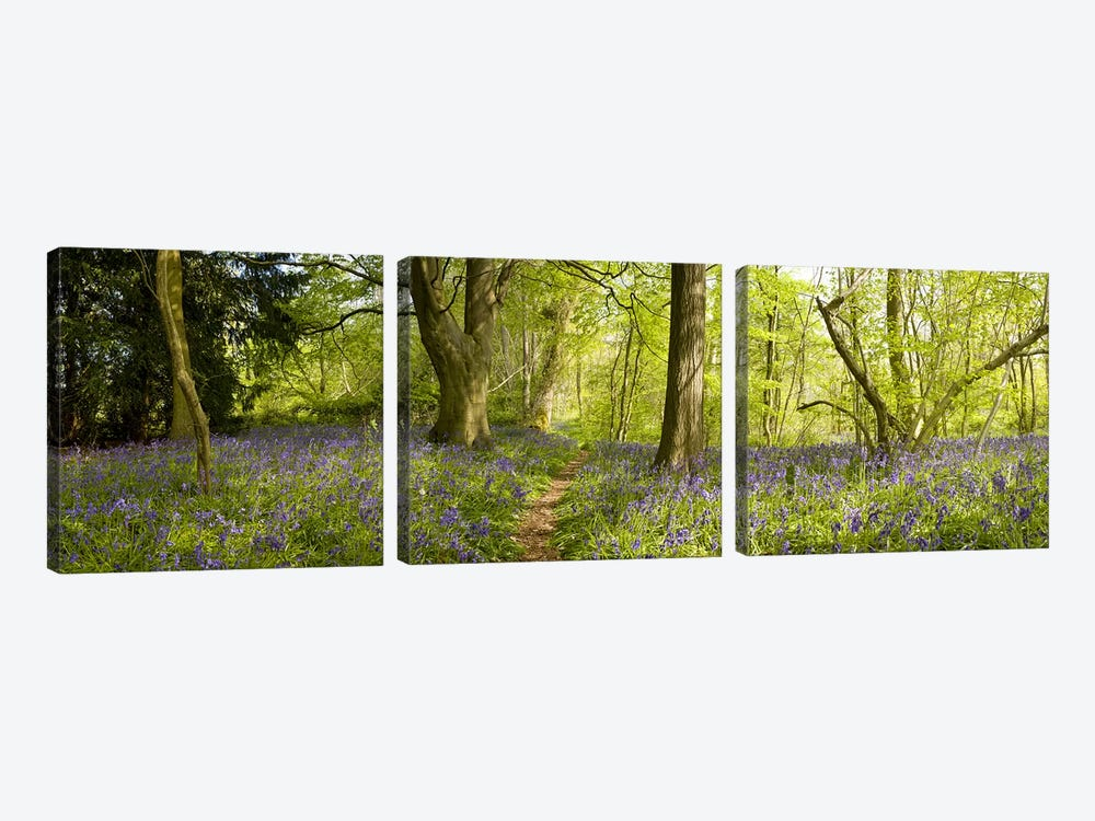 Trees in a forest, Thursford Wood, Norfolk, England by Panoramic Images 3-piece Canvas Artwork