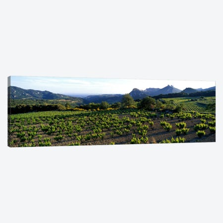 Vineyard Dentelles de Montmirail Vaucluse Provence France Canvas Print #PIM971} by Panoramic Images Canvas Art