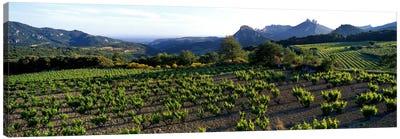 Vineyard Dentelles de Montmirail Vaucluse Provence France Canvas Print #PIM971