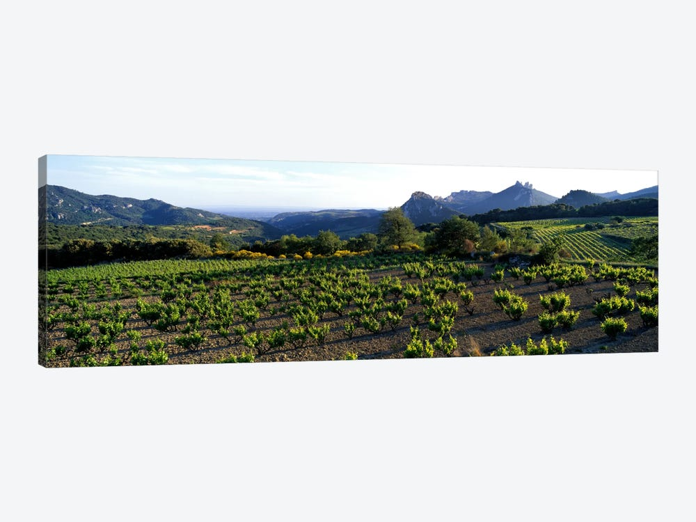 Vineyard Dentelles de Montmirail Vaucluse Provence France by Panoramic Images 1-piece Canvas Artwork