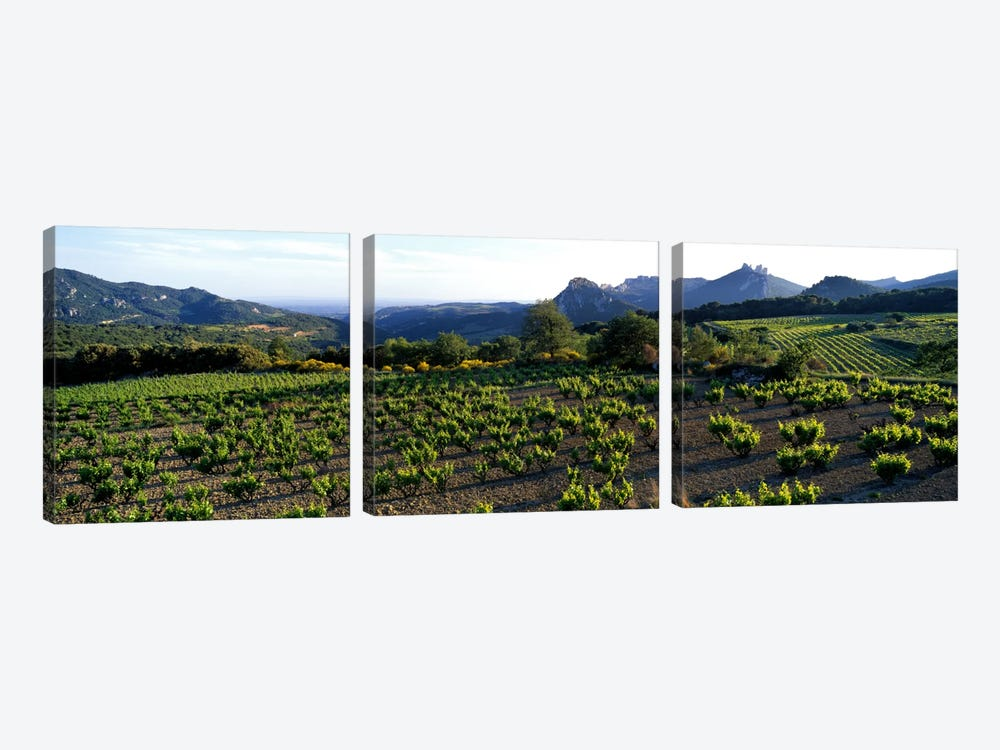 Vineyard Dentelles de Montmirail Vaucluse Provence France by Panoramic Images 3-piece Canvas Artwork