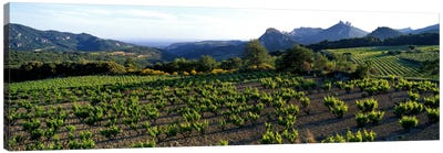 Vineyard Dentelles de Montmirail Vaucluse Provence France Canvas Art Print