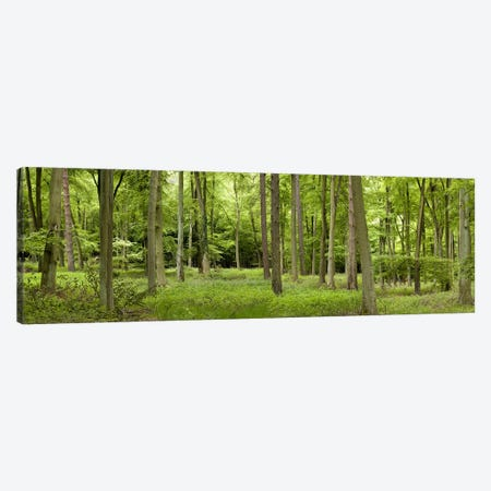 Spring in Thetford ForestNorfolk, England Canvas Print #PIM9720} by Panoramic Images Canvas Art Print