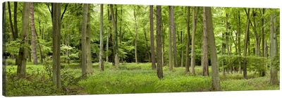 Spring in Thetford ForestNorfolk, England Canvas Art Print