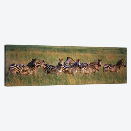 Burchell's zebras (Equus quagga burchellii) in a forest, Masai Mara National Reserve, Kenya Canvas Print #PIM9766} by Panoramic Images Canvas Art