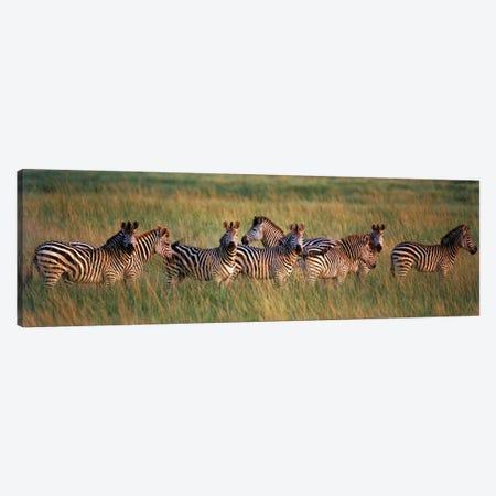 Burchell's zebras (Equus quagga burchellii) in a forest, Masai Mara National Reserve, Kenya Canvas Print #PIM9766} by Panoramic Images Canvas Art
