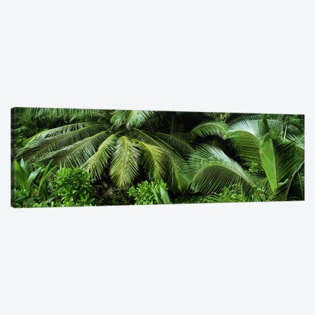 Palm fronds and green vegetation, Seychelles Canvas Print #PIM9786} by Panoramic Images Canvas Artwork