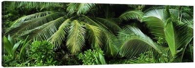 Palm fronds and green vegetation, Seychelles Canvas Print #PIM9786