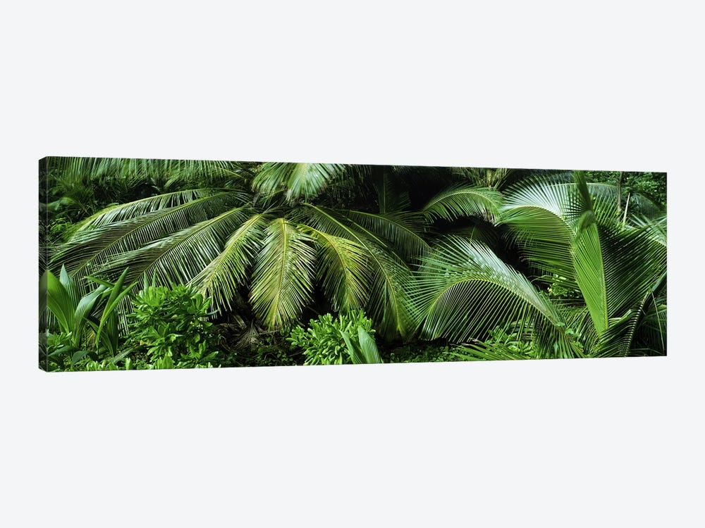 Palm fronds and green vegetation, Seychelles by Panoramic Images 1-piece Canvas Artwork