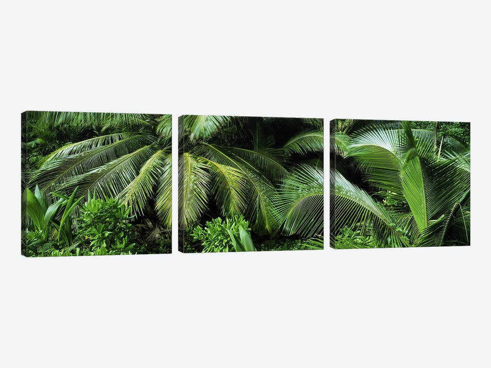 Palm fronds and green vegetation, Seychelles by Panoramic Images 3-piece Canvas Art