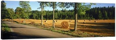 Hay bales in a field, Flens, Sweden Canvas Print #PIM9796