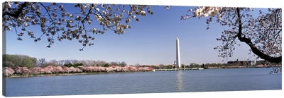 Cherry blossom with monument in the backgroundWashington Monument, Tidal Basin, Washington DC, USA Canvas Art Print