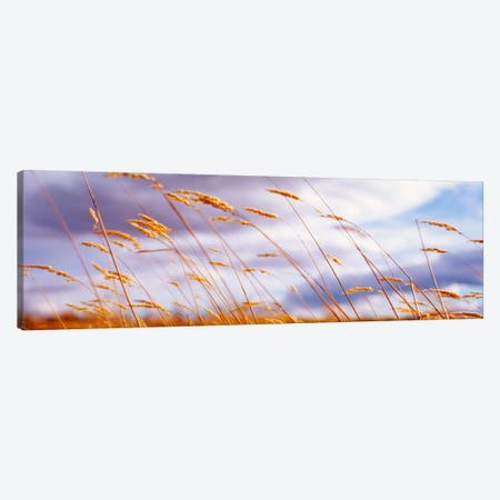 Windblown Wheat Stalks In Zoom Canvas Print #PIM988} by Panoramic Images Canvas Art Print