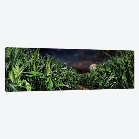Dark corn field Canvas Print #PIM9919} by Panoramic Images Canvas Wall Art