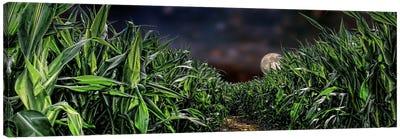 Dark corn field Canvas Print #PIM9919