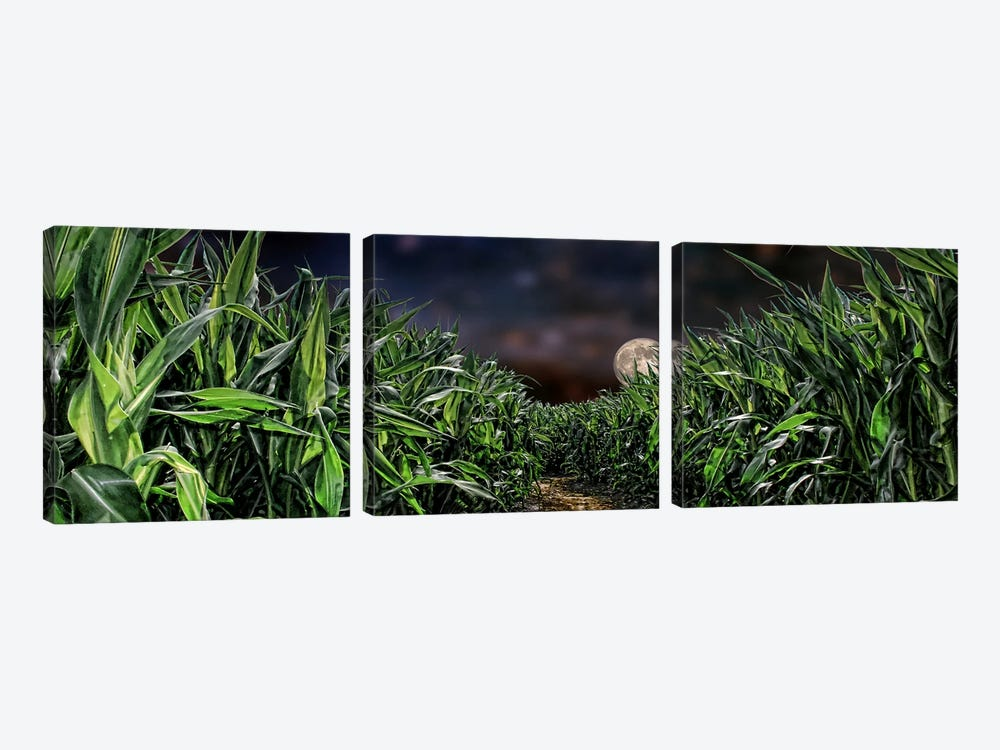 Dark corn field by Panoramic Images 3-piece Canvas Print