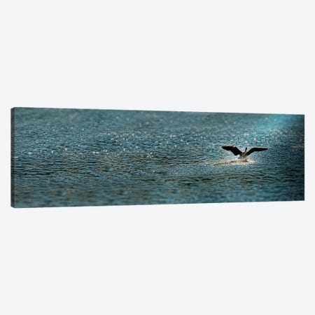 Bird taking off over water Canvas Print #PIM9920} by Panoramic Images Canvas Art Print