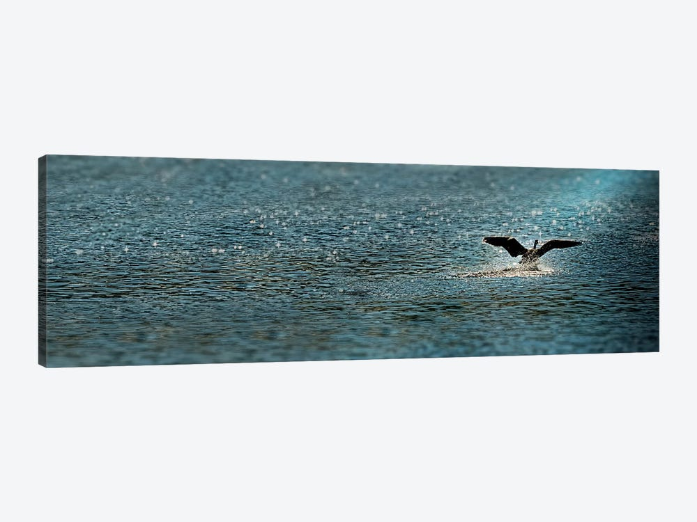 Bird taking off over water by Panoramic Images 1-piece Canvas Art Print