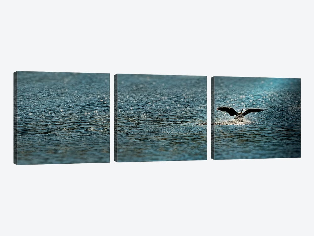 Bird taking off over water by Panoramic Images 3-piece Canvas Art Print