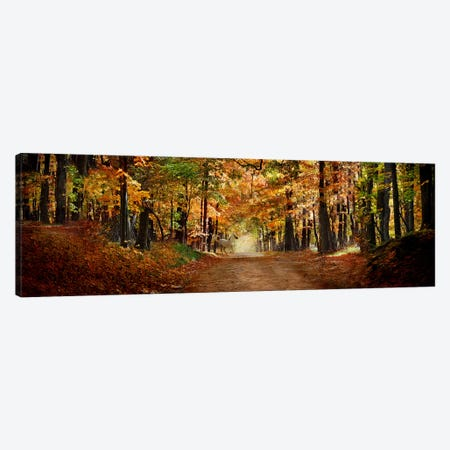 Horse running across road in fall colors Canvas Print #PIM9927} by Panoramic Images Canvas Artwork