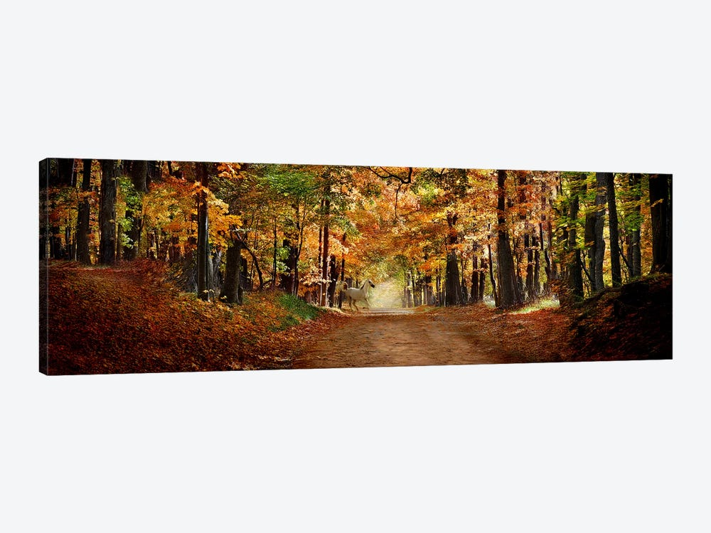 Horse running across road in fall colors by Panoramic Images 1-piece Canvas Artwork