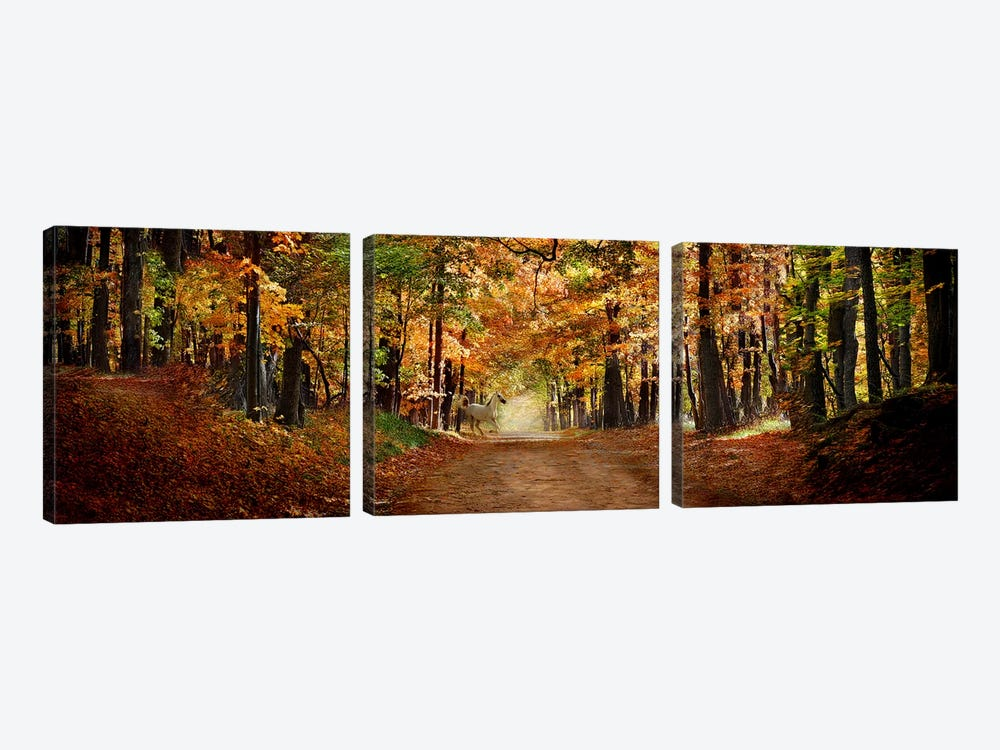 Horse running across road in fall colors by Panoramic Images 3-piece Canvas Art