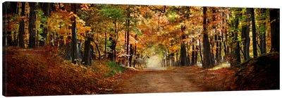 Horse running across road in fall colors Canvas Art Print