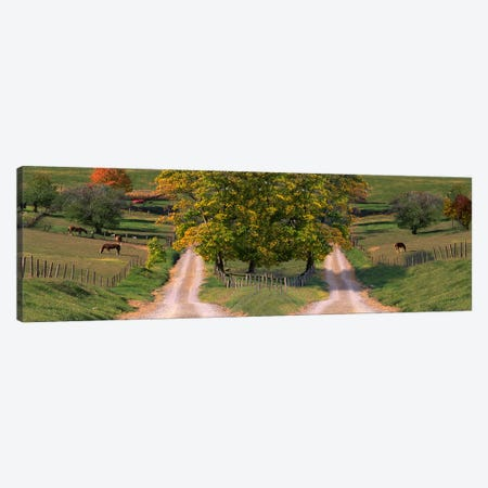 Two dirt roads passing through farms in autumn Canvas Print #PIM9930} by Panoramic Images Canvas Wall Art