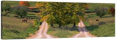 Two dirt roads passing through farms in autumn Canvas Art Print